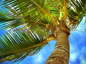 travel-event-palm-tree-beach