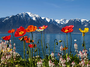 travel-switzerland-poppies-springtime